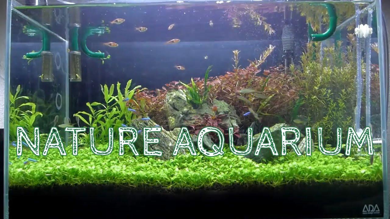 Nature Aquarium Aquascape : Nature Aquarium Aquascape, Iwagumi 2B - YouTube