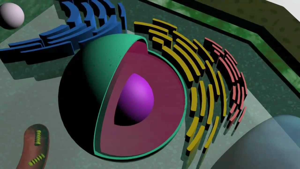 Displaying 18 gt images for 3d plant cell models