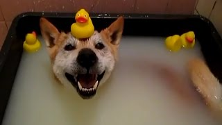 Perros y gatos que no les gusta bañarse