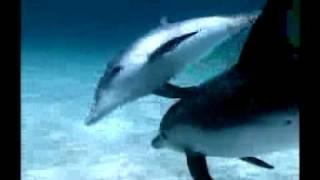 Comunicación Entre Delfines