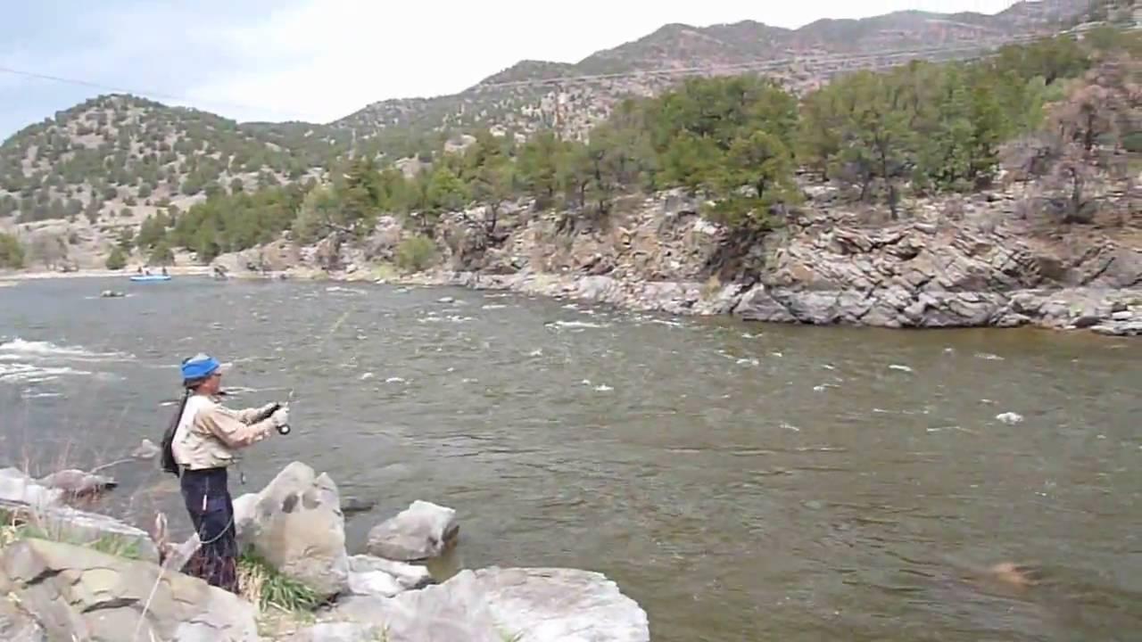 Andy kim arkansas river colorado fly fishing caddis hatch for Arkansas river colorado fishing