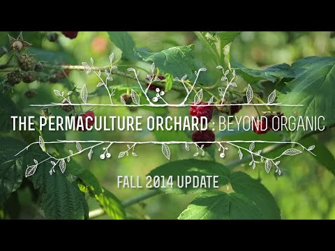 The Permaculture Orchard: Beyond Organic - Fall 2014 update