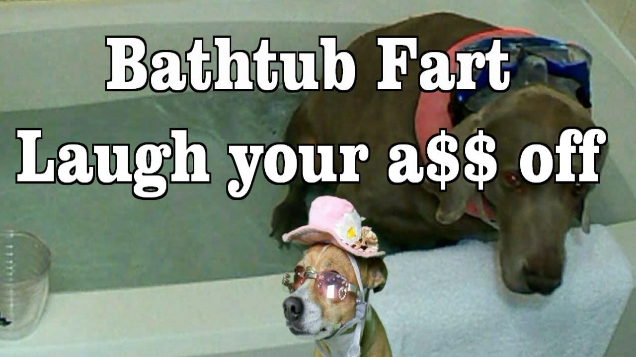 Can Dogs Fart Yahoo