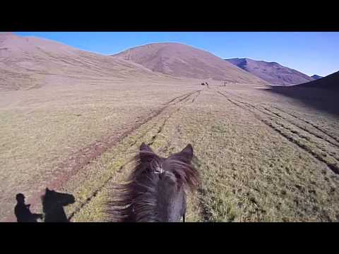Rounding up horses in North West Iceland  1
