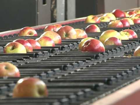 Witamina: яблочная история успеха