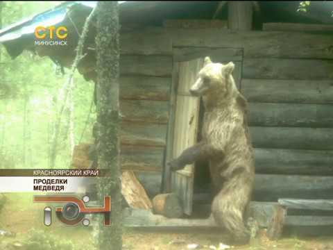 Проделки медведя