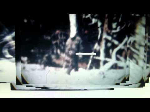 M.K.Davis discusses the authenticity of the Patterson Sasquatch film. Part 2
