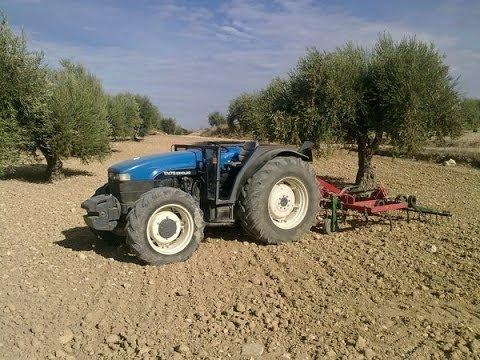 New Holland Tn 75 arando olivos cornicabro
