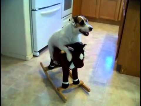 Najpametniji pas na svetu