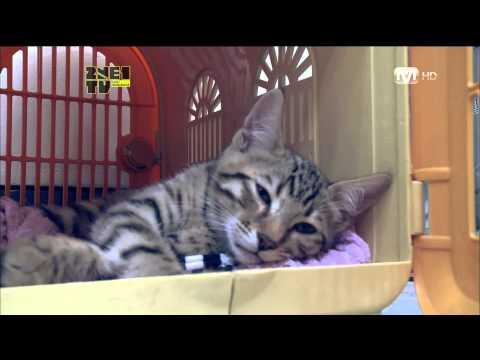 2NE1_TV_Season 3_E11-2 (KOR)
