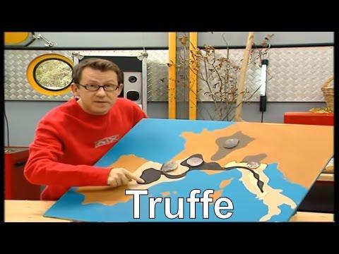 Où trouve-t-on les meilleures truffes ? - C'est pas sorcier