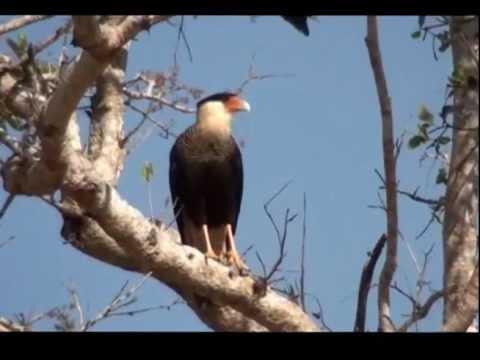 Beira rio - Fauna e flora do cerrado - Mato Grosso do Sul