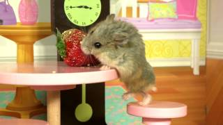 Tiny Hamster in a Tiny Mansion