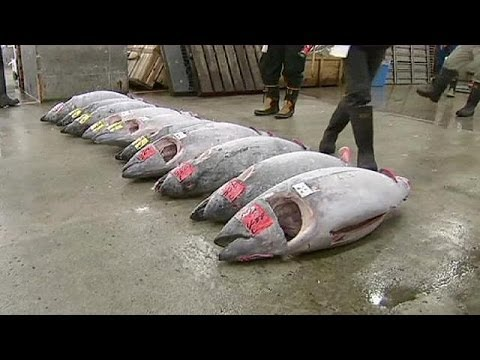 Tuna fetches 70,000 dollars at world's largest fish market in Tokyo - no comment