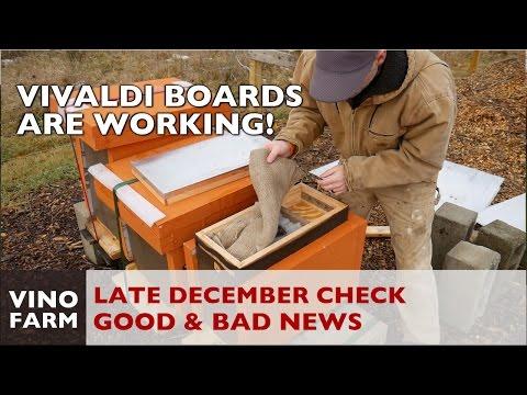 Vivaldi Board Winter Inspection - Beehive Moisture Management