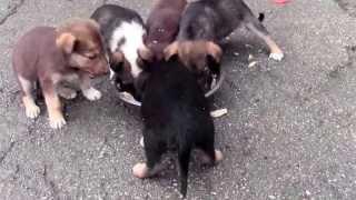 Viitorul canin al orașului Bălți!