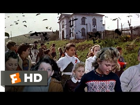 Crows Attack the Students - The Birds (6/11) Movie CLIP (1963) HD