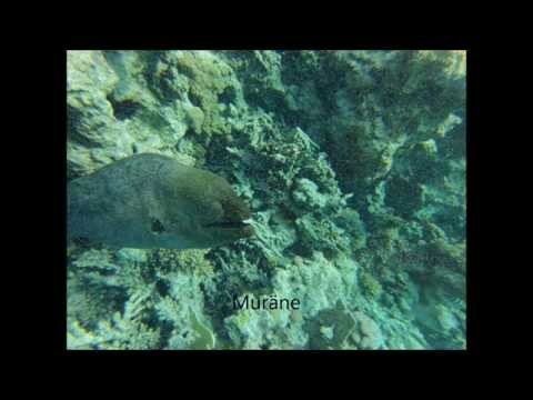 Red Sea Egypt - Snorkeling with Mogli - Dolphin-Tour