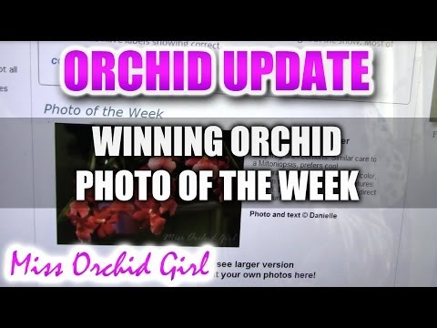 My Orchid featured on the American Orchid Society website!