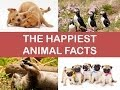 The Happiest Animal Facts