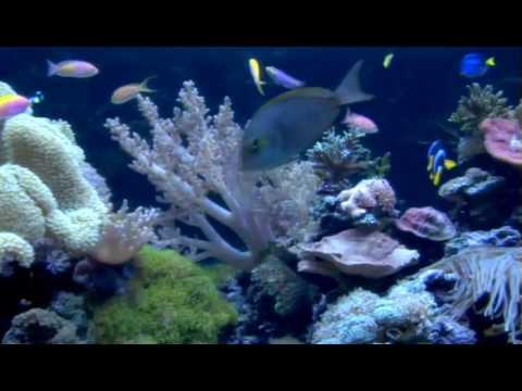 Custom aquariums saltwater and freshwater custom for Indoor koi aquarium