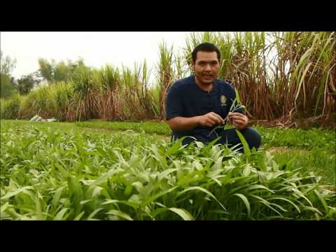 การปลูกผักปลอดสารพิษ