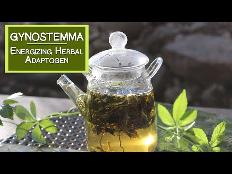 Gynostemma Tea, An Energizing Herbal Adaptogen