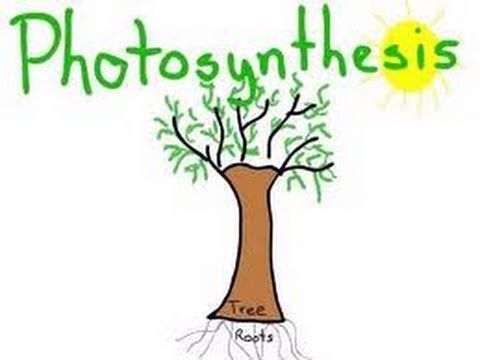 Photosynthesis - Complete Lesson for Kids- series of Education Videos