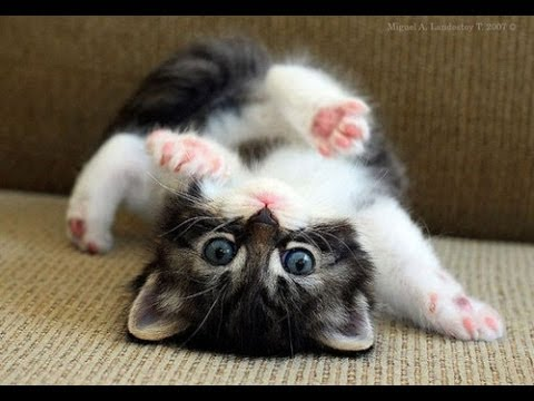 Funny Cats Video - Funny Cat Videos Ever- Funny Videos 2014 - Funny Animals - Funny Animal Videos