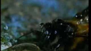معجزة النحل في 9 دقائق