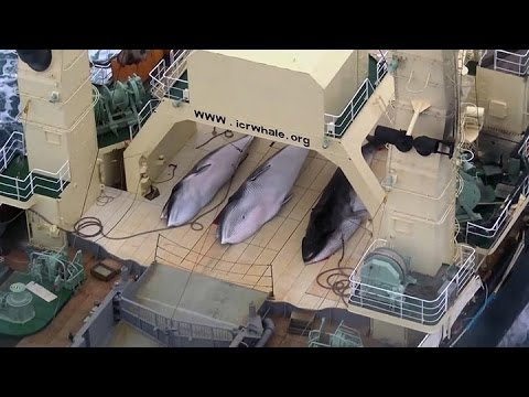Sea Shepherd intercepts Japanese whaling fleet