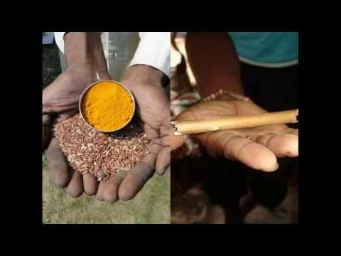 Medicinal Rice P5N Formulations for Synadenium Excess: Pankaj Oudhia's Medicinal Plant Database