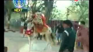 パキスタン。ダンスしてる人を見て踊りたくなった馬