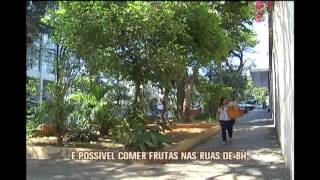 � poss�vel encontrar �rvores com frutas nas ruas de Belo Horizonte