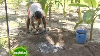 Success Story Of A Traditional Farmer : Narayanapillai