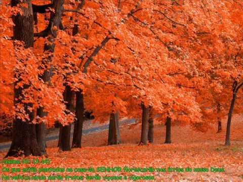 PREGADOR LUO - Árvore de Bons Frutos | APOCALIPSE 16