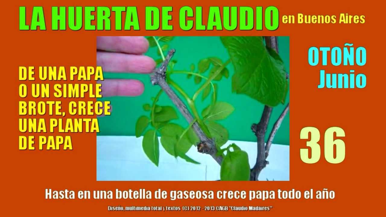 Cultivo de papa en botellas cultivar patatas en casa for Cultivo de verduras en casa