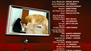 Cats & Dogs!! They Made The Movie!!