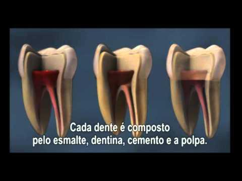 Saúde Bucal - Estrutura Dental
