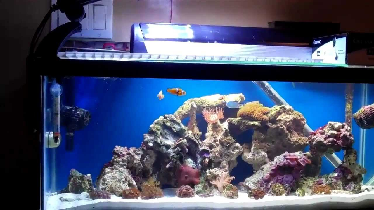 20 gallon long reef tank day 2 youtube for Saltwater fish for 10 gallon tank