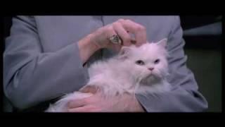 Movie Cat Mr Bigglesworth Gets Upset