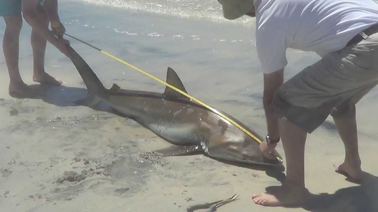 Beach shark fishing australia youtube for Shark fishing gear for beach