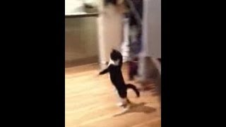 Kitty does the Two Legged Hop