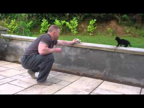why do cats dislike water