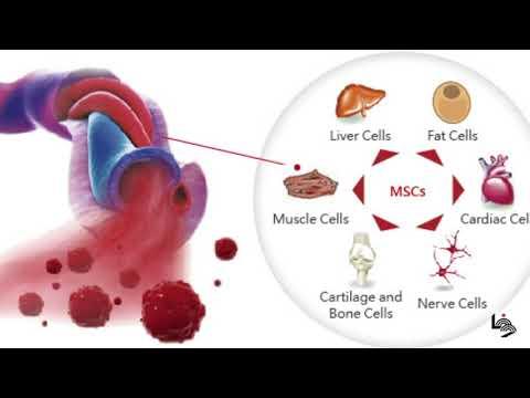 الخلايا الجذعية ... نافذة أمل للشفاء من الأمراض المستعصية
