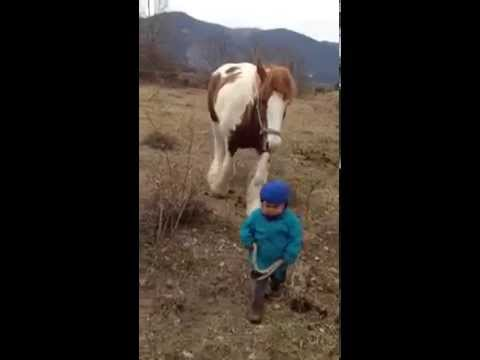 Video Our best attentions for broad horses. Autor: Imgagen Miniatura Youtube
