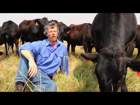 Sweet Grass Farm Produces The Highest Quality Beef Available