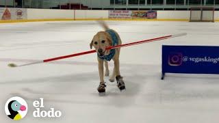 Perro jugador de hockey
