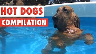 Funny Dogs Video Compilation