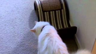 Funny Pet Interviews – Talking Bird, Dog, Cat